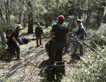 In this May 7, 2019, photo released by Cannabis Removal on Public Lands (CROP) Project, a group including U.S. Forest Service rangers, scientists and conservationists work to reclaim a so-called trespass grow site where nearly 9,000 cannabis plants were illegally cultivated. (Jackee Riccio/CROP via AP Photo)