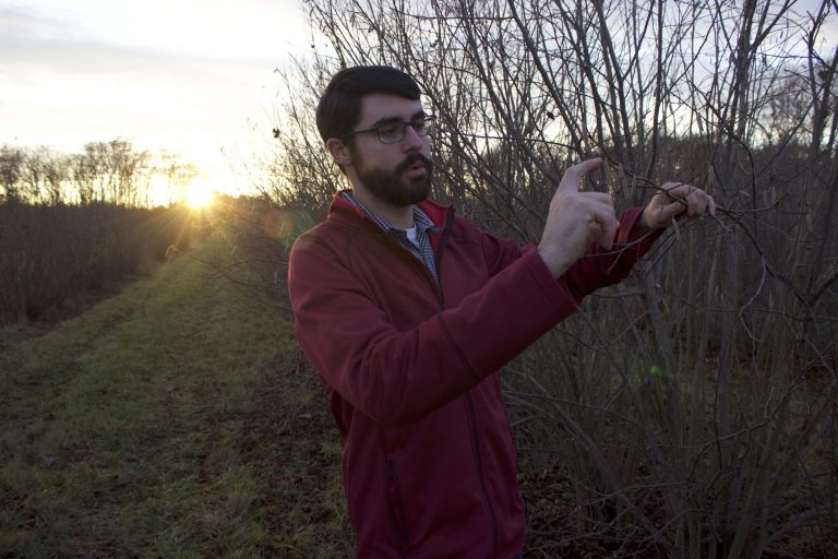 David Hlubik, 23, inspects the branch of a hazelnut tree, one of thousands at a Rutgers University research center in Cream Ridge, N.J. (Grant Hill for WHYY)