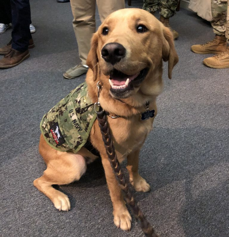 Service dogs can be trained to provide very different types of support to their human companions, as medical students learn from interacting with