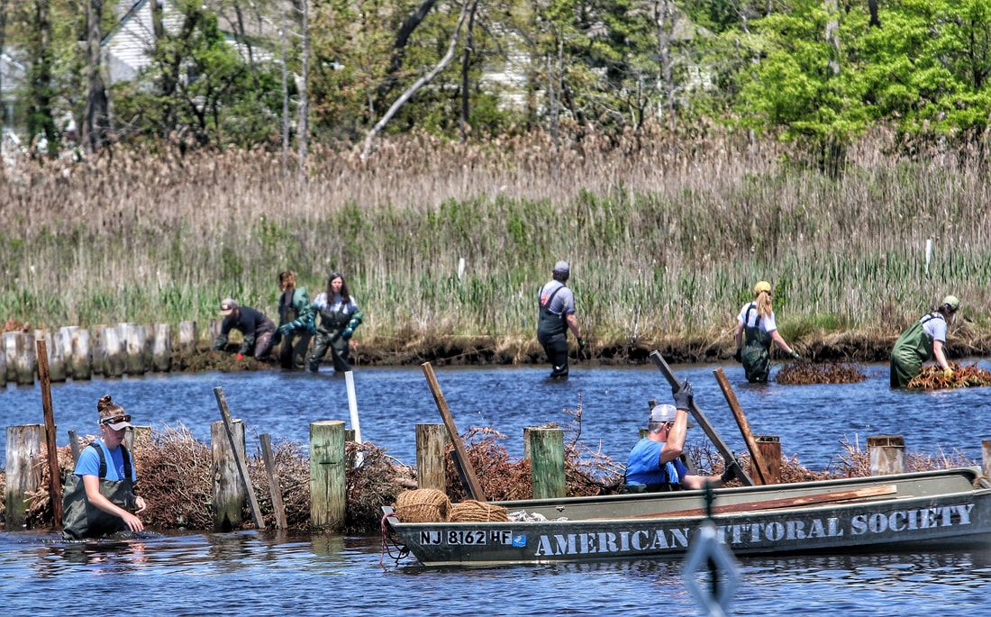 House passes bill that would create federal grant program to support 'living shorelines'