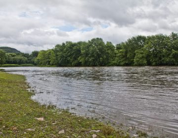 A view of the Delaware River, Monroe County. (Kimberly Paynter/WHYY)
