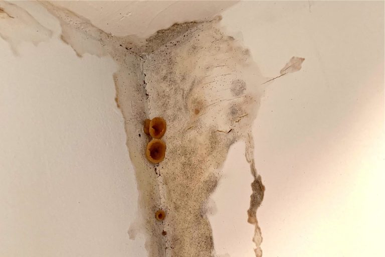 Mold and fungus grow in a home built by Streamline. (Photo provided by homeowner)