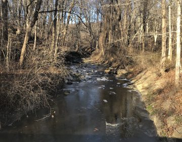 White Clay Creek near Newark. Officials says the Clean Water Trust would pave the way for cleaner drinking water, improved stormwater runoff and higher-quality waterways. (Cris Barrish/WHYY)