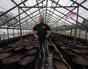 Mike Spray, a hemp grower, poses for a photo in a greenhouse Monday, Feb. 03, 2020, at 302 Hemp Co, in Georgetown, Del. It's been a year since the hemp growing pilot program in Delaware started and the USDA has made regulations for hemp growing. (Saquan Stimpson for WHYY)