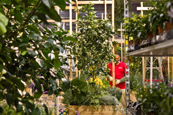 """""""The Lemonary"""" a design by London's Wayward, being built Thursday at the 2020 Flower Show. (Kimberly Paynter/WHYY)"""