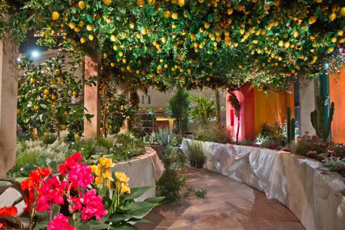 Citrus trees line the main exhibit of the 2020 Philadelphia Flower Show. (Kimberly Paynter/WHYY)