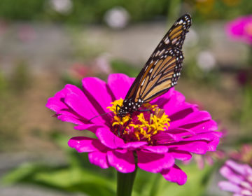 a butterfly on a flower