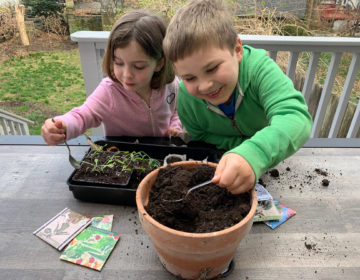 Anna Barsanti, 5, and her brother, Pierce Barsanti, 7, plant seeds to put under the four foot long grow lamp in the basement of their family home in Mt. Airy. Those seedlings can be transplanted to the garden later in the spring. (Courtesy of Erin Mooney)
