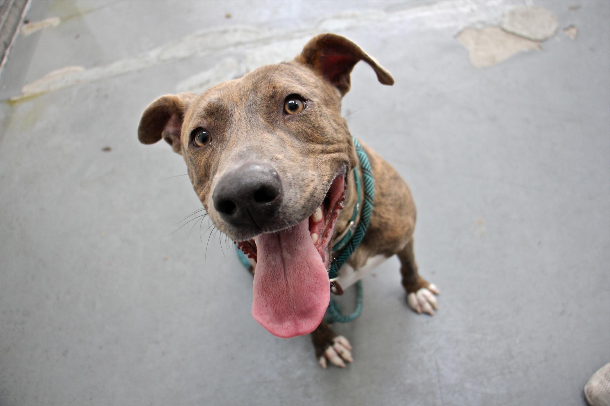 Judah, a high-energy dog at Morris Animal Refuge. (Emma Lee/WHYY)