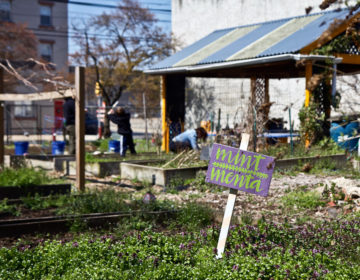 A family works at the La Parcelas community garden in Kensington. (Kimberly Paynter/WHYY)