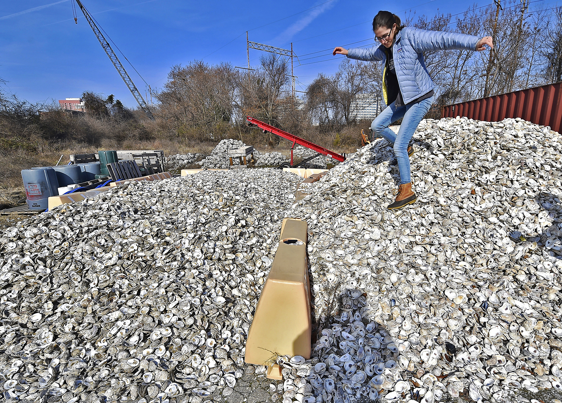 Improving Delaware Estuary With Wider Oyster Shell Recycling Whyy