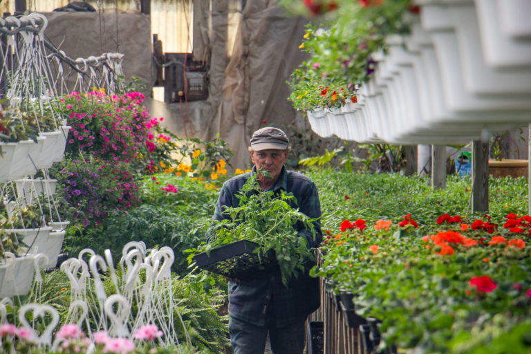 Ron Fox brings some tomato plants to a customer at his farm stand in Pittsgrove, N.J. (Emma Lee/WHYY)