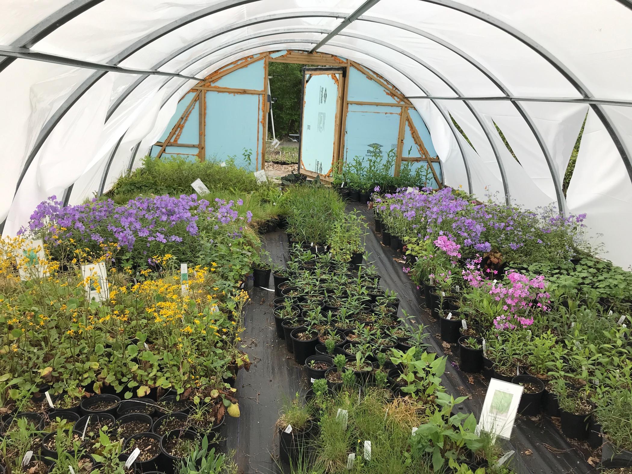 How To Start A Garden During Coronavirus Whyy