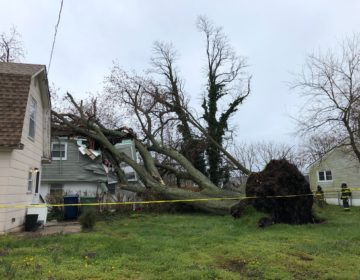 A large tree fell on a home in Neptune Township on April 9. No one was injured. (Courtesy of Neptune Township OEM)