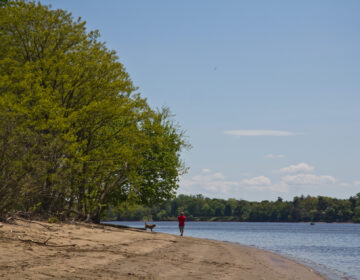 Trails and river beaches at Neshaminy State Park in Bucks County, Pennsylvania are open. (Kimberly Paynter/WHYY)