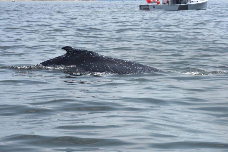 (U.S. Coast Guard file photo.)