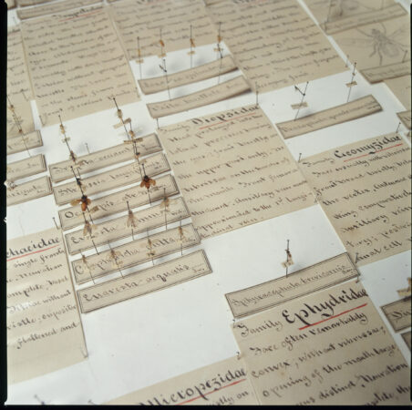 A Victorian collection of insects with handwritten labels (David Graham/The Wagner Free Institute of Science)