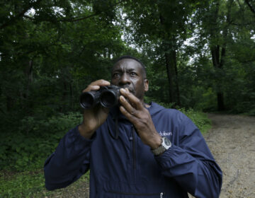 Keith Russell, program manager of urban conservation at Audubon Pennsylvania, lowers his binoculars while conducting a breeding bird census, at Wissahickon Valley Park Friday, June 5, 2020 in Philadelphia. (AP Photo/Jacqueline Larma)