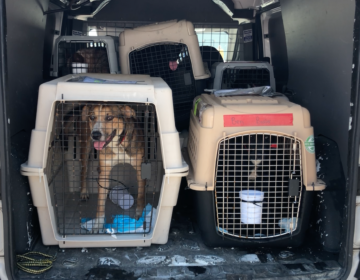 Brandywine Valley SPCA Tropical Storm Cristobal airlift mission