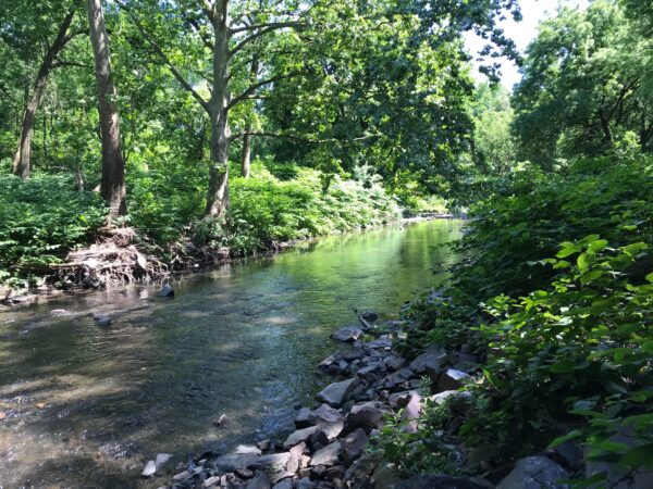A stretch of Tacony Creek that runs through Olney. (Avi Wolfman-Arent/Keystone Crossroads)