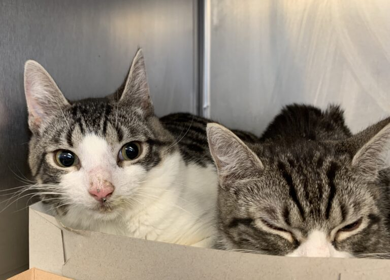 Cats rescued from Lititz raid