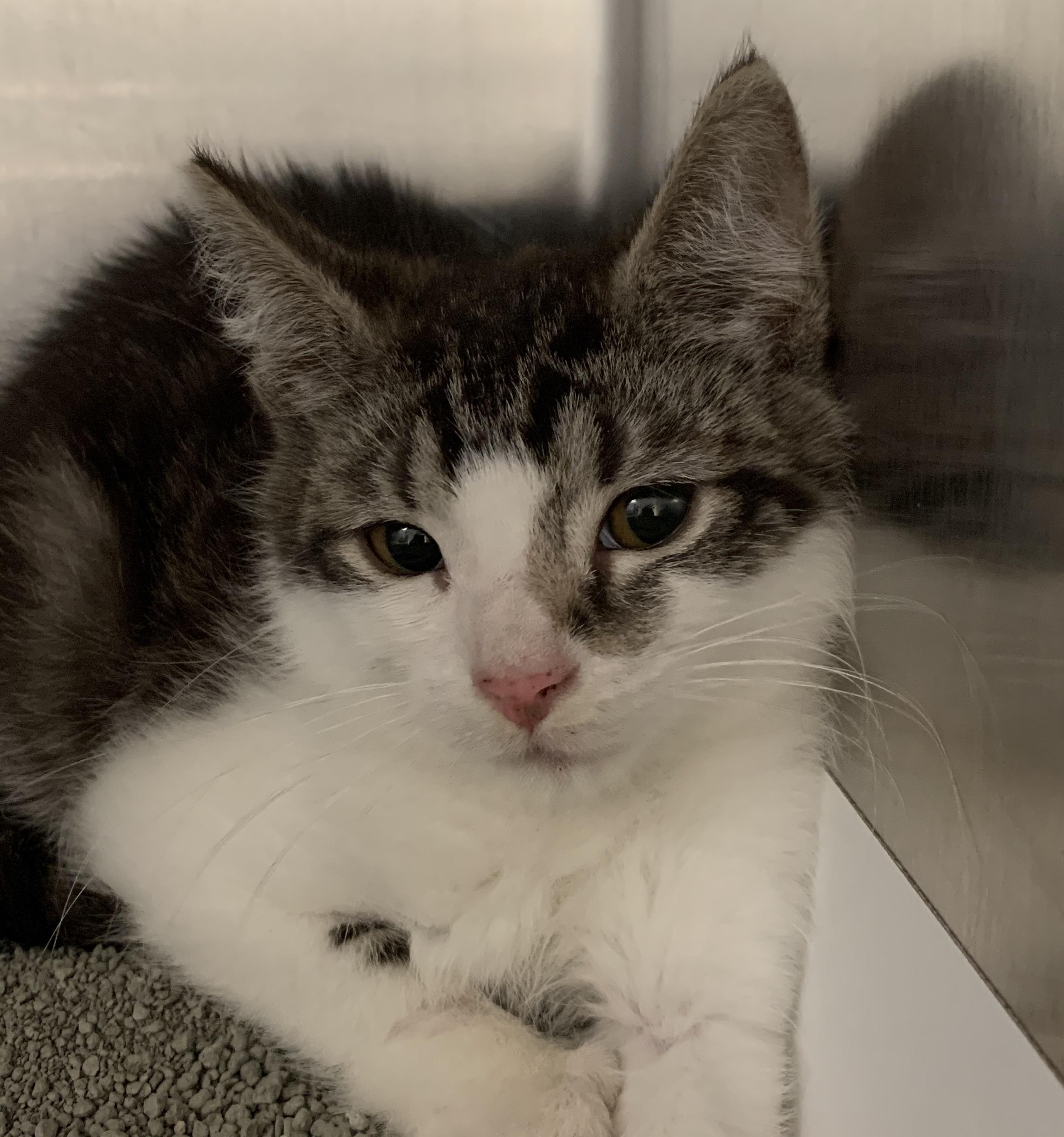Cat rescued from Lititz raid