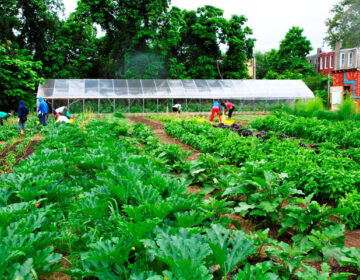 Neighborhood Foods Farm is a fully functioning 3/4-acre farm in the middle of West Philadelphia. This farm and a number of other community gardens produce 6,500 pounds of vegetables annually. (Image courtesy of Urban Tree Connection)