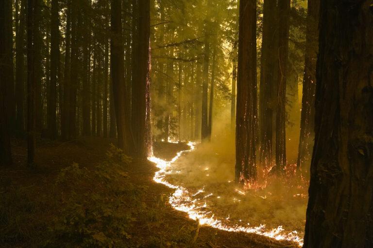 A forest burns as the CZU August Lightning Complex Fire advances on Thursday, Aug. 20, 2020, in Bonny Doon, Calif. (AP Photo/Marcio Jose Sanchez)