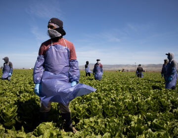 With the coronavirus spreading, farms try to keep workers like these in Greenfield, Calif. safe through physical distancing and other measures but advocates for laborers say protections are often not adequate. (Brent Stirton/Getty Images)