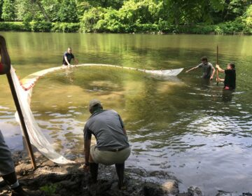 Scientists fishing in the Brandywine Creek, at the site of the former West Street dam in Delaware. (Jim Shanahan/Brandywine Shad 2020)