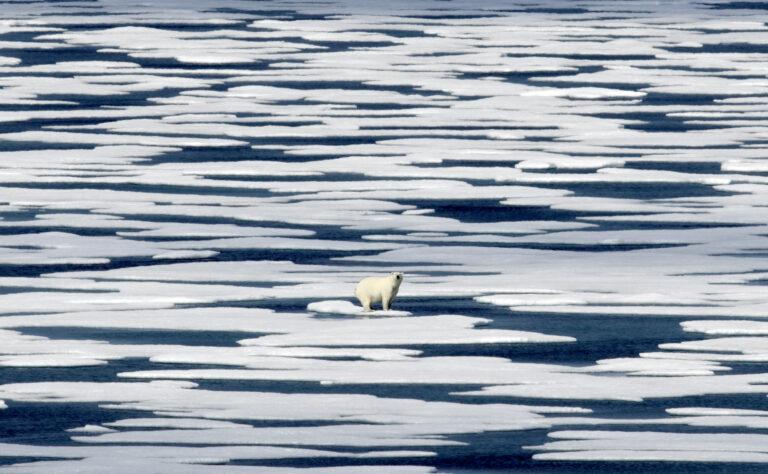 A polar bear stands on ice