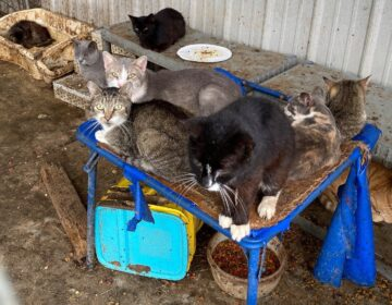 182 cats seized from property in Camden, Delaware