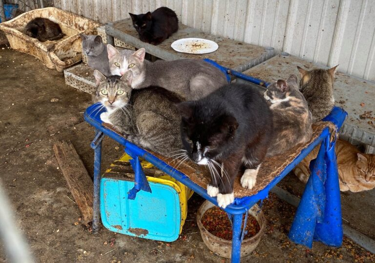 184 cats seized from property in Camden, Delaware