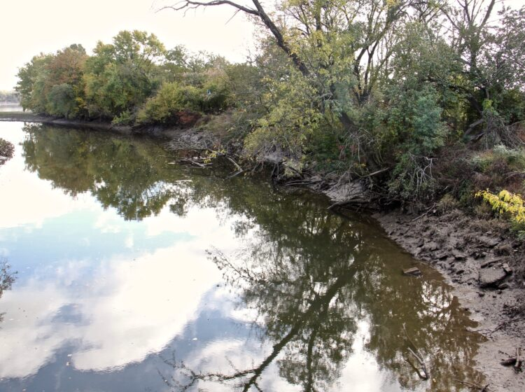tree-lined riverbank
