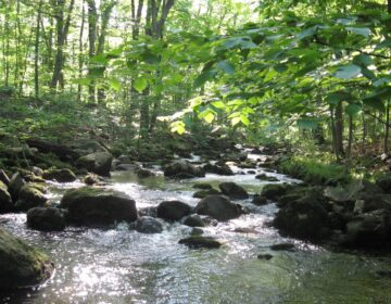 Upper Tohickon Creek in Bucks County