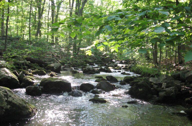 Upper Tohickon Creek in Bucks County