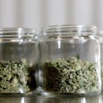 Marijuana buds are seen in a prescription bottle as they are sorted at Compassionate Care Foundation's grow house, Friday, March 22, 2019, in Egg Harbor Township, N.J. (AP Photo/Julio Cortez)