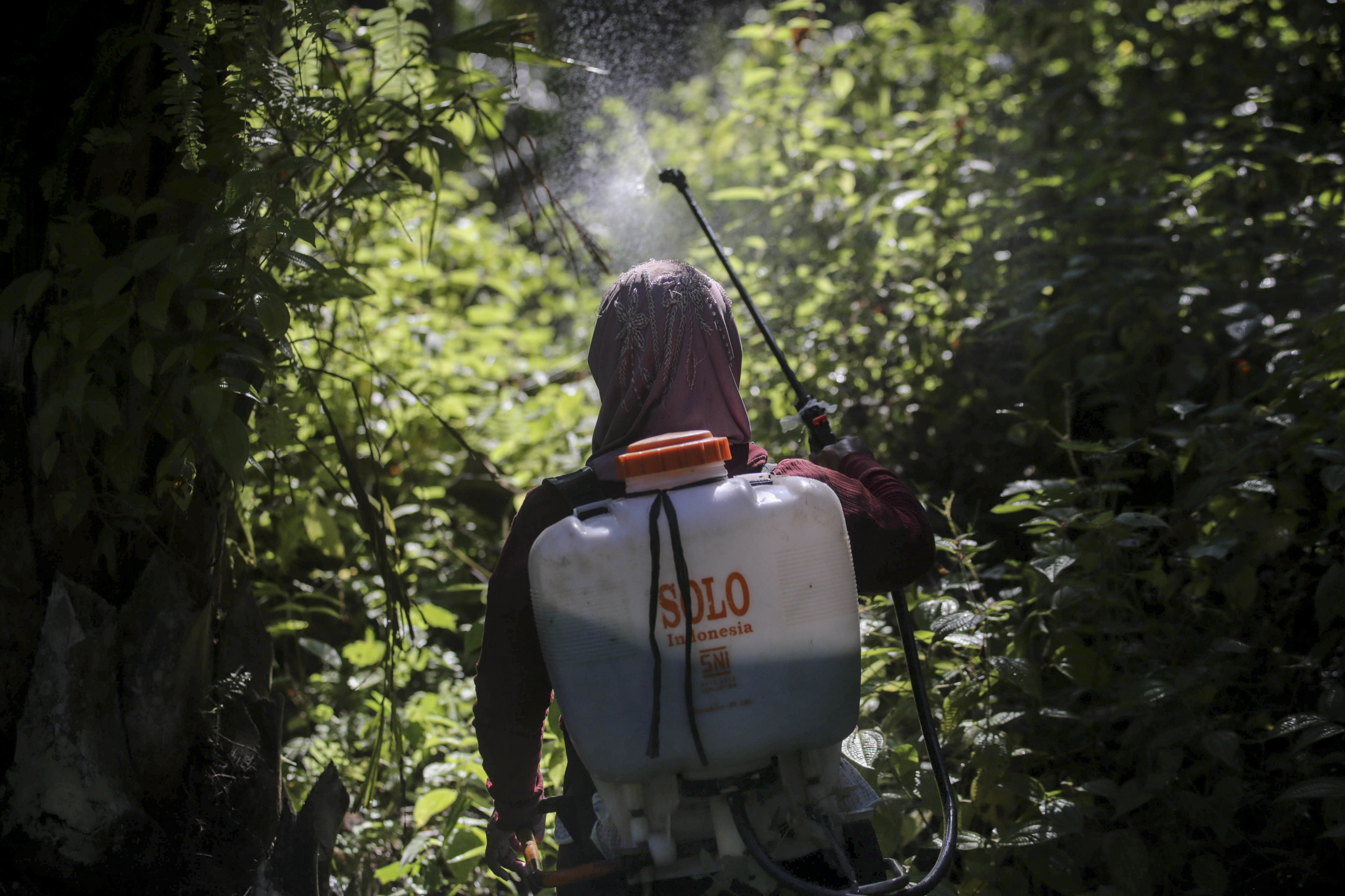 A female worker sprays herbicide in a palm oil plantation in Sumatra, Indonesia