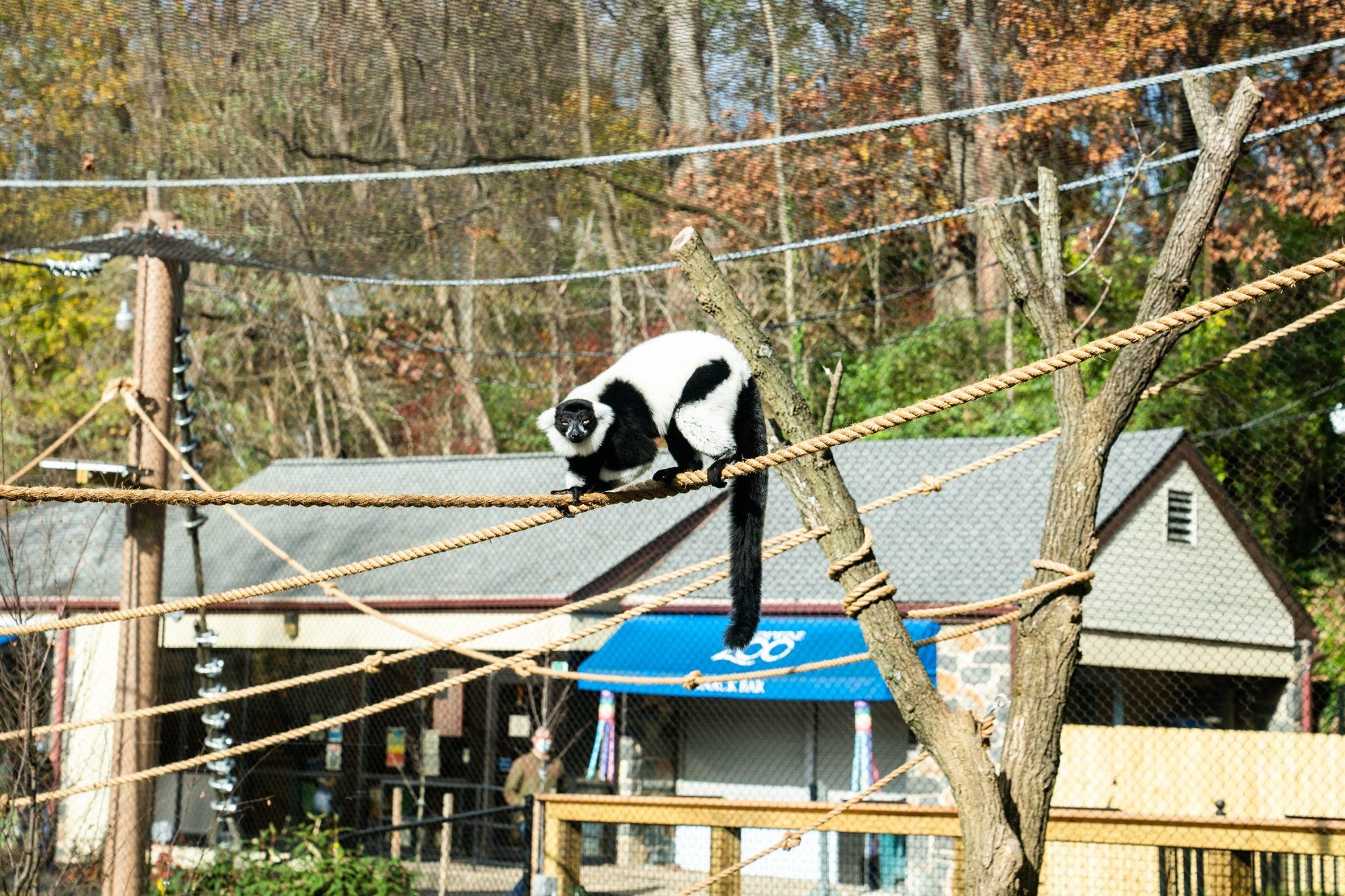 Brandywine Zoo Madagascar exhibit