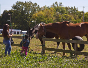 Neighbors say hello to the horses grazing at the lot across from the Fletcher Street Stables in North Philadelphia.