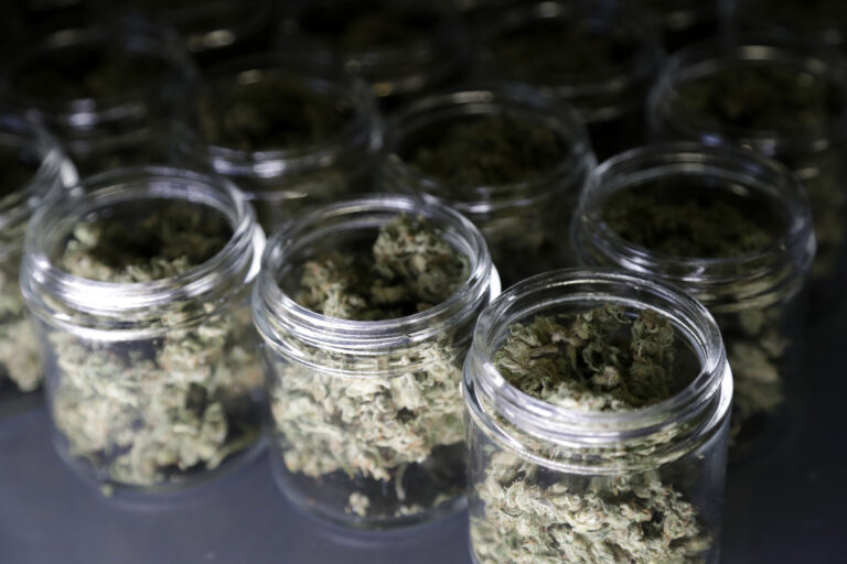 Marijuana buds are seen in a prescription bottle as they are sorted at Compassionate Care Foundation's grow house