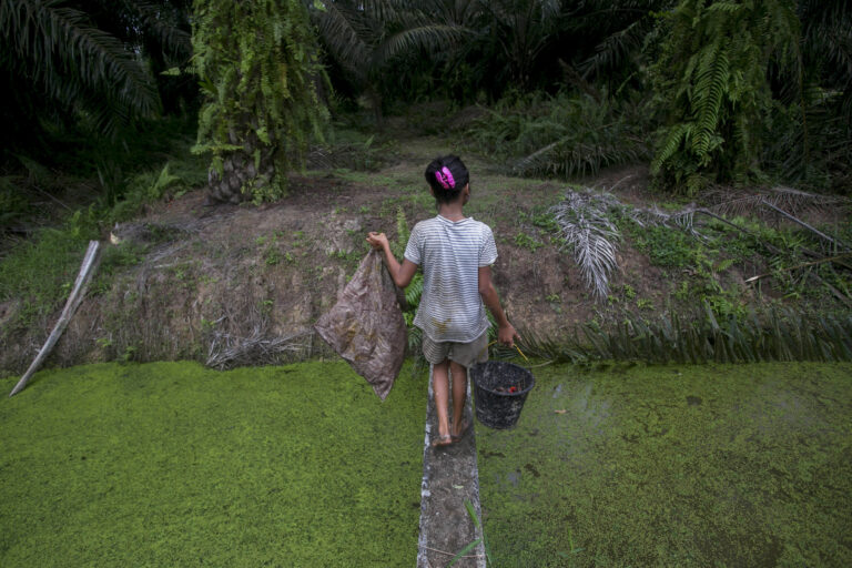 A child carries palm kernels collected from the ground across a creek at a palm oil plantation in Sumatra, Indonesia, Monday, Nov. 13, 2017. (AP Photo/Binsar Bakkara)