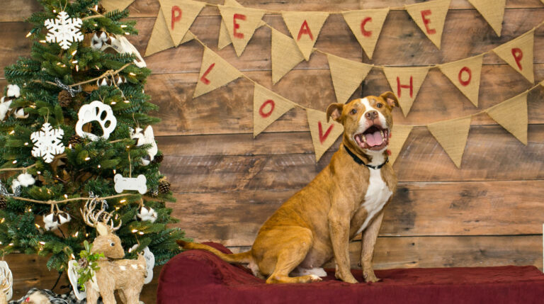 Frosted Flakes the dog stands on a Barker Bed next to a Christmas tree
