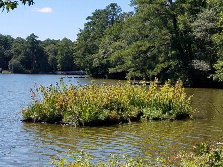 Floating wetlands at Trap Pond State Park.