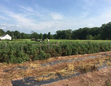 This 23-acre farm owned by Suzanne Banyacsky is one of three new additions to the Montgomery County Agricultural Land Preservation Program. (Courtesy of the Montgomery County Planning Commission)