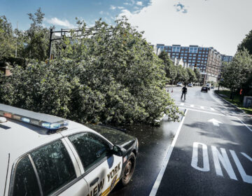 Police officers direct traffic around a fallen tree brought down by heavy rains and wind, Tuesday, Aug. 4, 2020, in West New York, N.J. (AP Photo/John Minchillo)