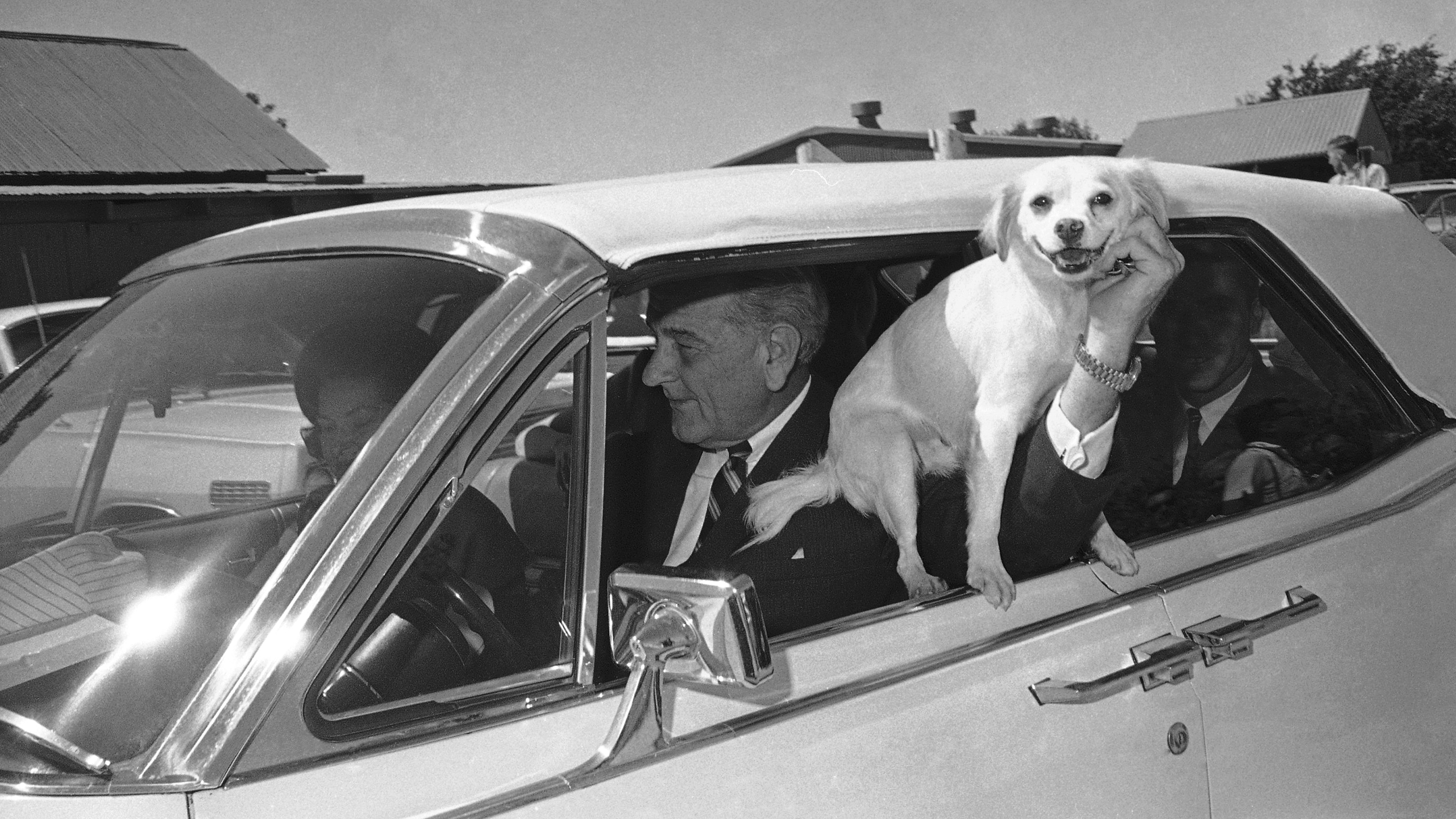 Yuki, President Lyndon Johnson's dog, is held out the window of the car driven by LBJ as the first family starts a ride around the Texas ranch in Stonewall