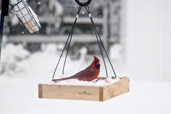 A cardinal visits a snow covered bird feeder in Moorestown, N.J.