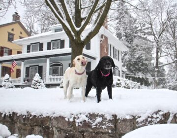 Dogs frolic in their snowy yard in Moorestown, N.J.