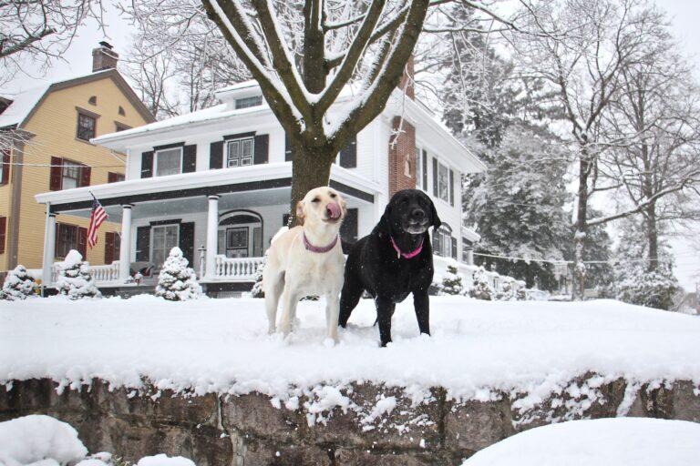 Dogs frolic in their snowy yard in Moorestown, N.J.
